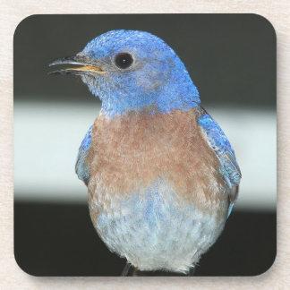 Western bluebird coaster