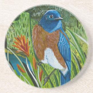 Western Bluebird Drink Coasters
