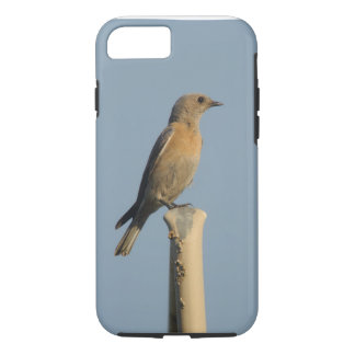 Western Bluebird iPhone 7 Case