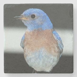 Western bluebird stone coaster