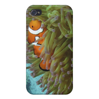 Western Clownfish ( Amphiprion oaris ), in iPhone 4 Cover