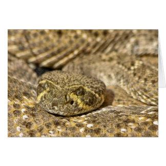 Western Diamondback Rattlesnake Card
