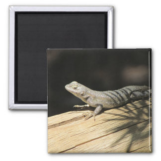 Western Fence Lizard Photo Magnet