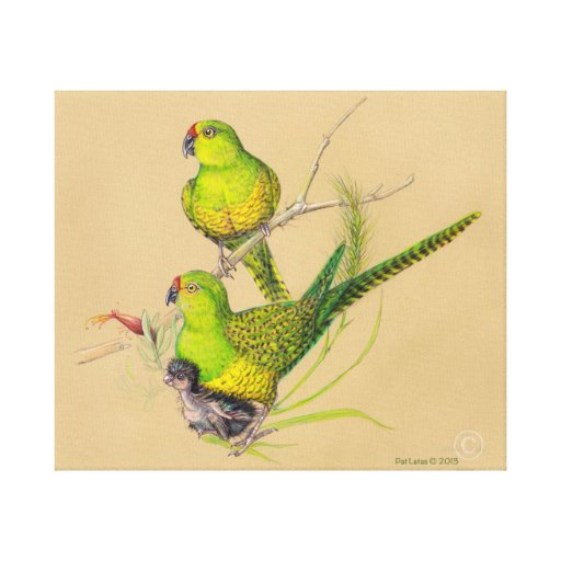 Western Ground Parrot Family Canvas Print