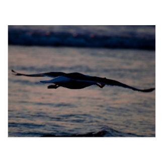 Western Gull at Dusk Postcard