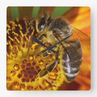 Western Honey Bee Macro Photo Square Wall Clock