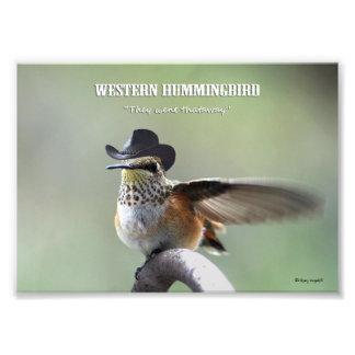 'Western Hummingbird' Photographic Print
