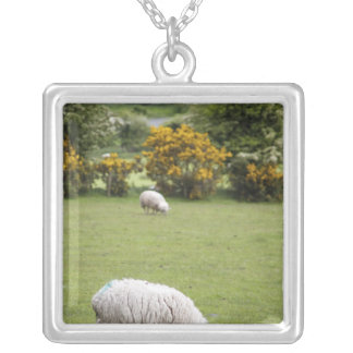 Western Ireland, a full fleeced black-faced Silver Plated Necklace