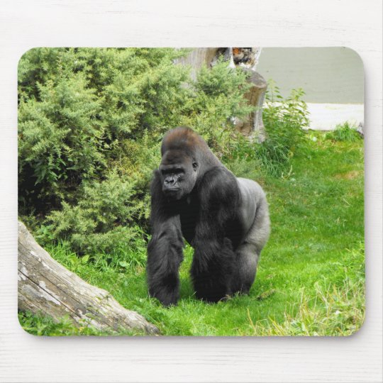 Western Lowland silverback male gorilla Mouse Pad