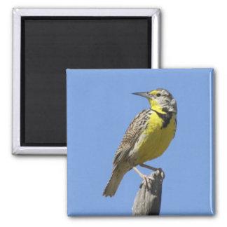 Western Meadowlark Magnet