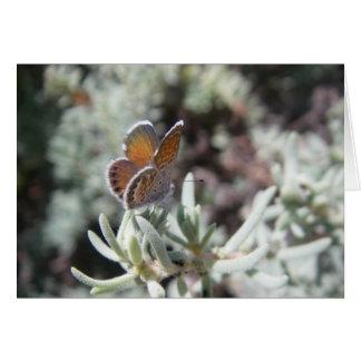 Western Pygmy Blue Butterfly Blank Card