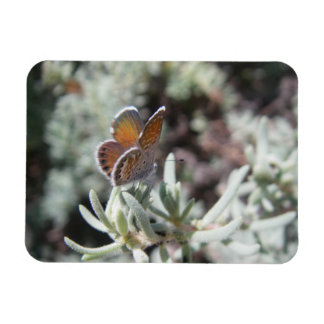 Western Pygmy Blue Butterfly Flexible Photo Magnet