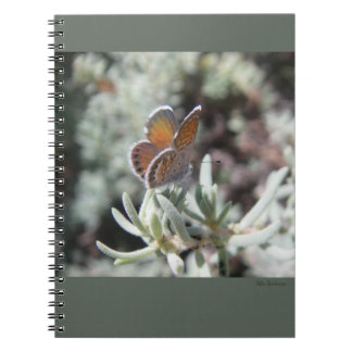Western Pygmy Blue Butterfly Spiral Notebook