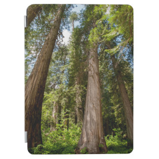 Western Red Cedar Trees iPad Air Cover