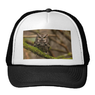 Western Screech Owl Trucker Hat
