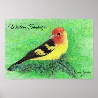 Western Tananger Bird Coloured Pencil Art Poster