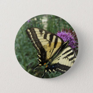 Western Tiger Swallowtail Butterfly 2 Inch Round Button
