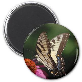 Western Tiger Swallowtail Round Magnet
