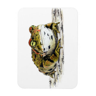 Western Toad Magnet