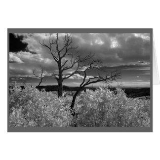 Western Tree Card