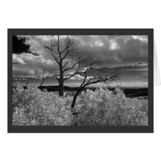 Western Tree with dark grey border Card