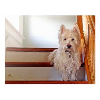 Westie Dog Sitting on the Stairs, Vintage Look Postcard