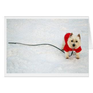 westie in red coat card