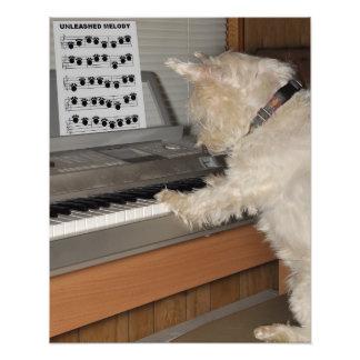 Westie jouant le piano photos d'art