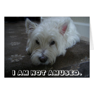Westie Not Amused Photo Greeting Card