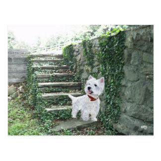Westie on the Ivy Steps Postcard