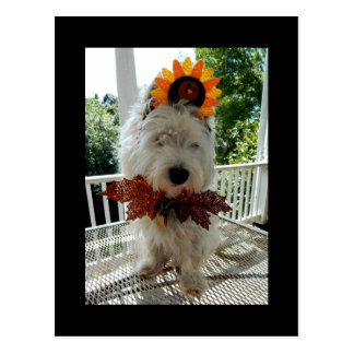 Westie Thanksgiving Turkey Bowtie Postcard
