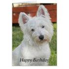 Westie, West Highland Terrier dog birthday card
