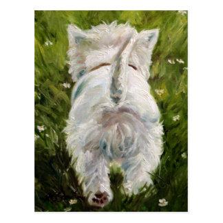 Westie West Highland Terrier Post Card