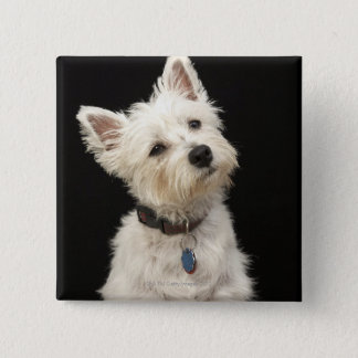 Westie (West Highland terrier) with collar 2 Inch Square Button
