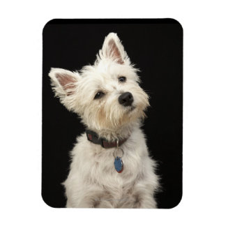 Westie (West Highland terrier) with collar Rectangular Photo Magnet