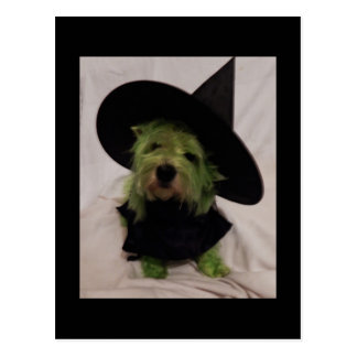 Westie - Wicked Witch of the Westies Postcard