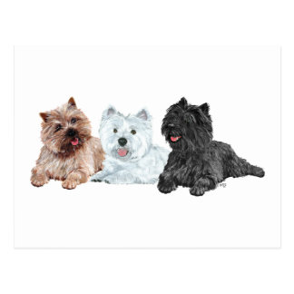 Westie with Two Cairn Terriers Postcard
