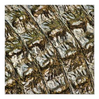 Wet Alligator Back Abstract Photograph Card