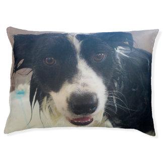 Wet Border Collie Large Dog Bed