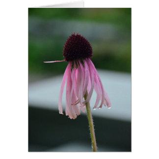 Wet cone flower card