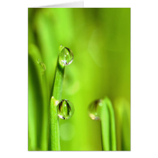 Wet Grass With Raindrops Greeting Card