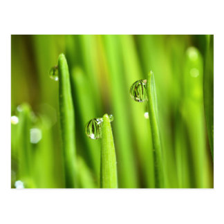 Wet Grass With Raindrops Postcard