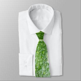 Wet, green, young, striped pumpkin photo tie
