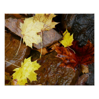 Wet Leaves and Rocks Autumn Nature Poster