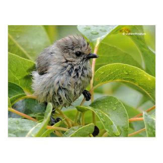 Wet Male Bushtit on the Laurel Postcard
