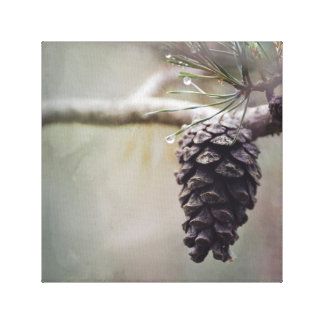 Wet Pine Cone on Pine Tree Branch Soft Green Canvas Print