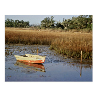 Wetland Myrtle Beach Postcard
