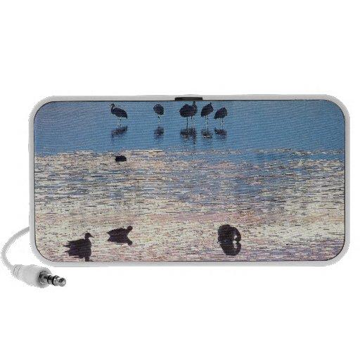 Wetlands Birds at Dawn OrigAudio Doodle Speaker