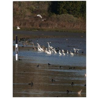 Wetlands Birds Wildlife Animals Photography Dry-Erase Whiteboards