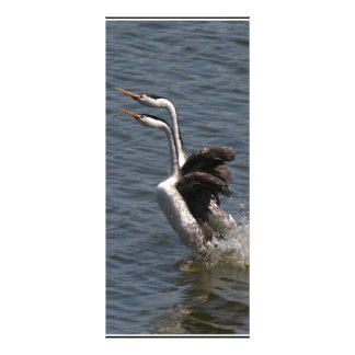 Wetlands Birds Wildlife Animals Photography Full Color Rack Card